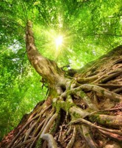 Punti di contatto tra bioenergetica e yoga
